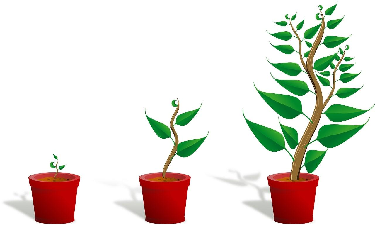 成長_植物